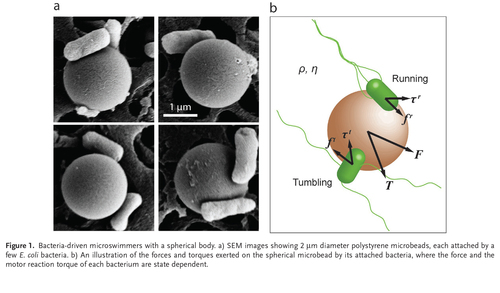 Propulsion and Chemotaxis in Bacteria-Driven Microswimmers