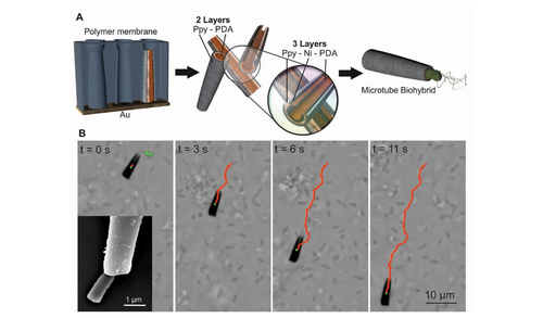 Biohybrid microtube swimmers driven by single captured bacteria