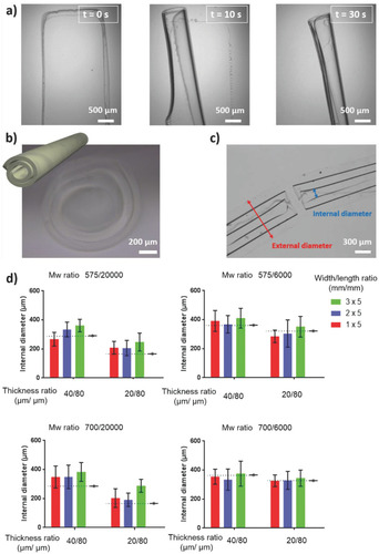 Self‐Folded Hydrogel Tubes for Implantable Muscular Tissue Scaffolds