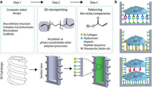 3D‐Printed Microrobotic Transporters with Recapitulated Stem Cell Niche for Programmable and Active Cell Delivery