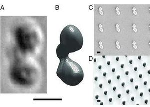 Selection for Function: From Chemically Synthesized Prototypes to 3D-Printed Microdevices