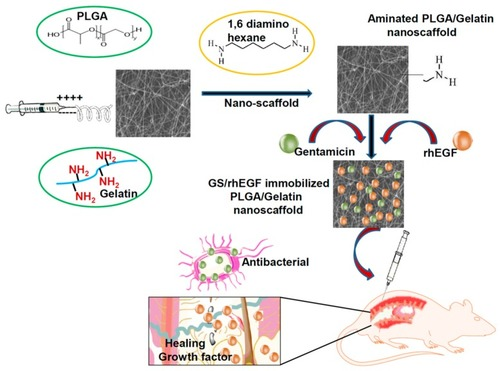 In Vivo Biocompatibility of Electrospun Biodegradable Dual Carrier (Antibiotic + Growth Factor) in a Mouse Model-Implications for Rapid Wound Healing