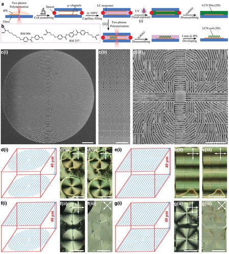 3D Microstructures of Liquid Crystal Networks with Programmed Voxelated Director Fields