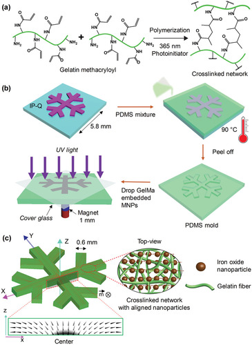 Biodegradable Untethered Magnetic Hydrogel Milli-Grippers