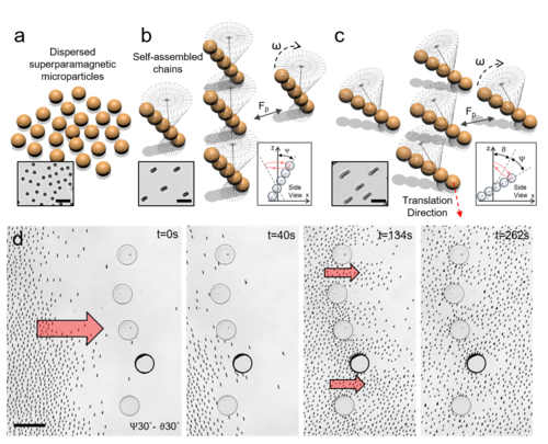 Programmable collective behavior in dynamically self-assembled mobile microrobotic swarms