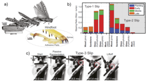 Morphological intelligence counters foot slipping in the desert locust and dynamic robots
