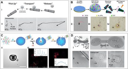 Mobile microrobots for active therapeutic delivery