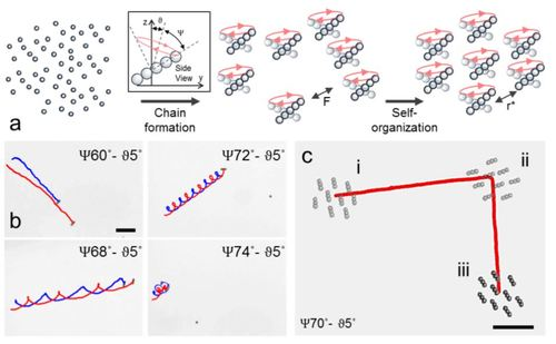 Cohesive self-organization of mobile microrobotic swarms