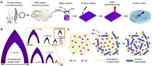 Multifunctional and biodegradable self-propelled protein motors
