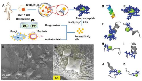 Peptide-Induced Biomineralization of Tin Oxide (SnO2) Nanoparticles for Antibacterial Applications
