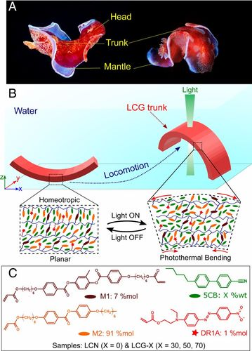 Bioinspired underwater locomotion of light-driven liquid crystal gels