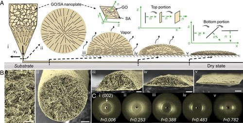 Microribbons composed of directionally self-assembled nanoflakes as highly stretchable ionic neural electrodes