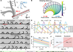 Bioinspired cilia arrays with programmable nonreciprocal motion and metachronal coordination